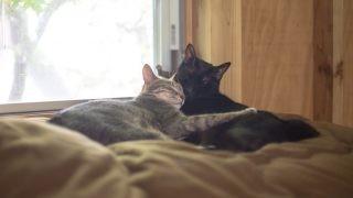 仲良く寝る2人。いつもながら本当に仲良さそう。