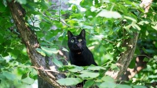 木の上から顔を出すバルちゃん。