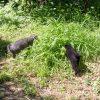 茂みに逃げ込んだ獲物を探す2人。
