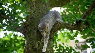 登った木から下りるメルちゃん。