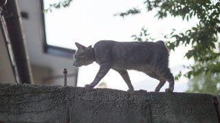 塀の上を歩くメルちゃん。