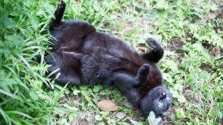 草むらでコテンするバルちゃん。