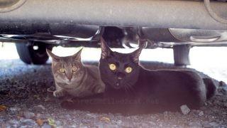 車の下に2人いた。
