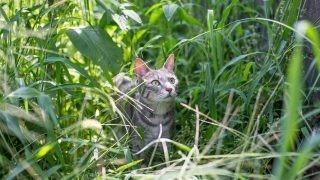 草の中のメルちゃん。