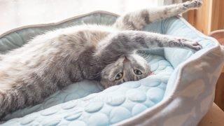 窓際の猫ベッドで寝てたメルちゃん。
