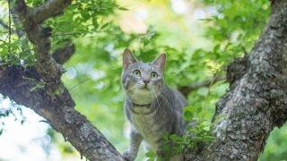 木の上からも索敵。