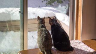 2人で雪景色を眺めるメルバルちゃん。