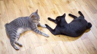 床でくつろぐ2人。